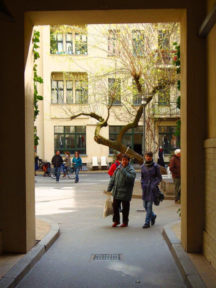 Les courbes étonnantes d'un arbre des Hackesche Höfe à Berlin.