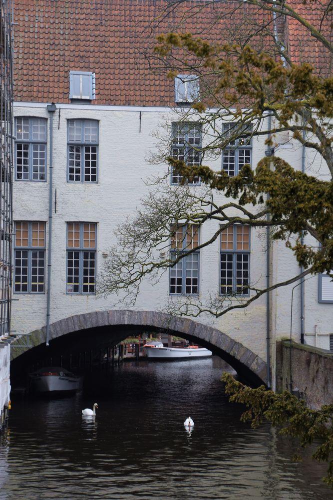 cygnes Bruges Brugge