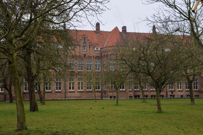 arbres Bruges Brugge