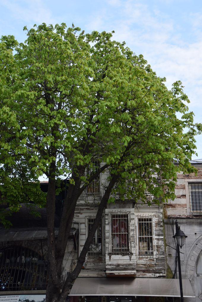 partie bois Istanbul