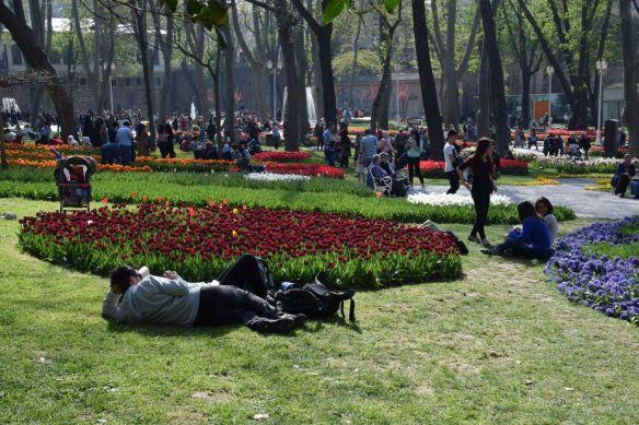 tulipes parc de Gülhane Istanbul