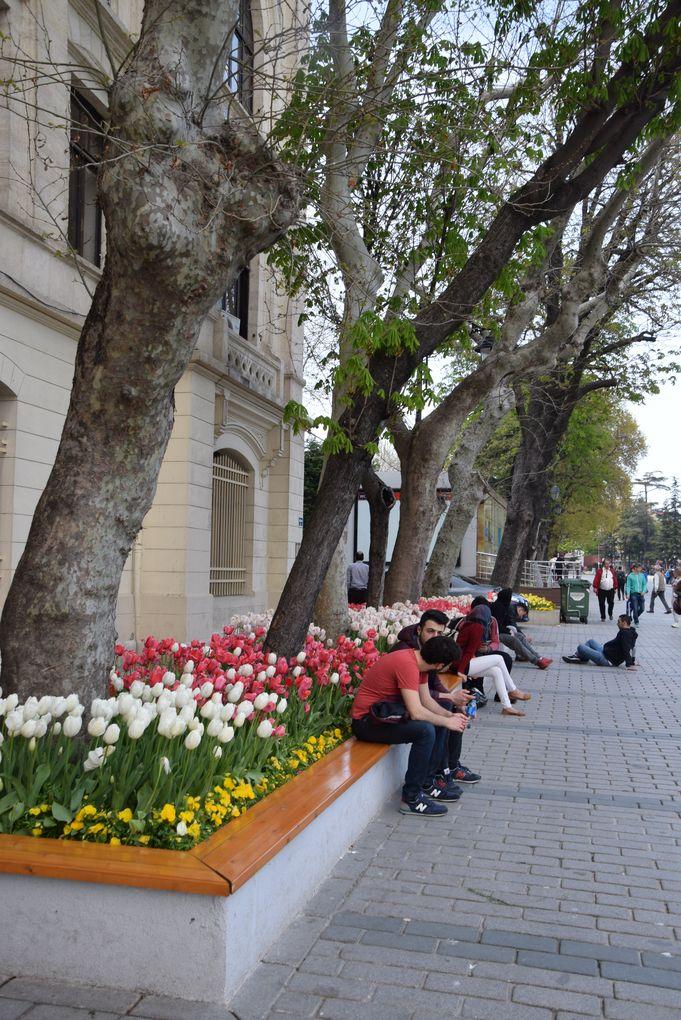 tulipes istanbul