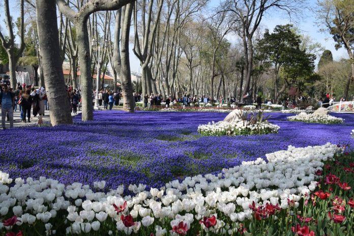 tulipes Gülhane istanbul