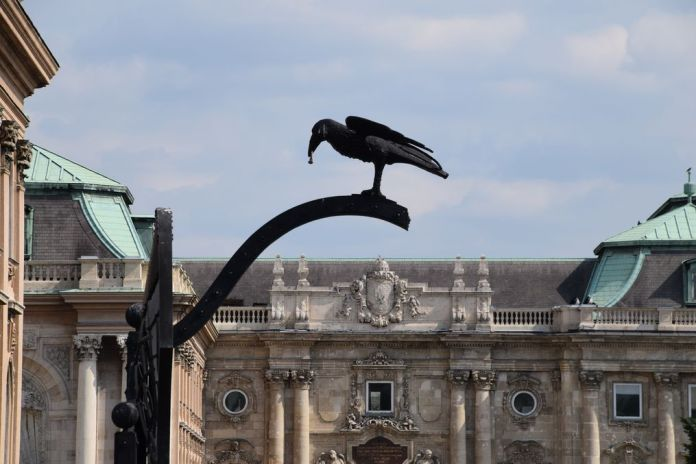 corbeau palais Budapest Hongrie Hungary