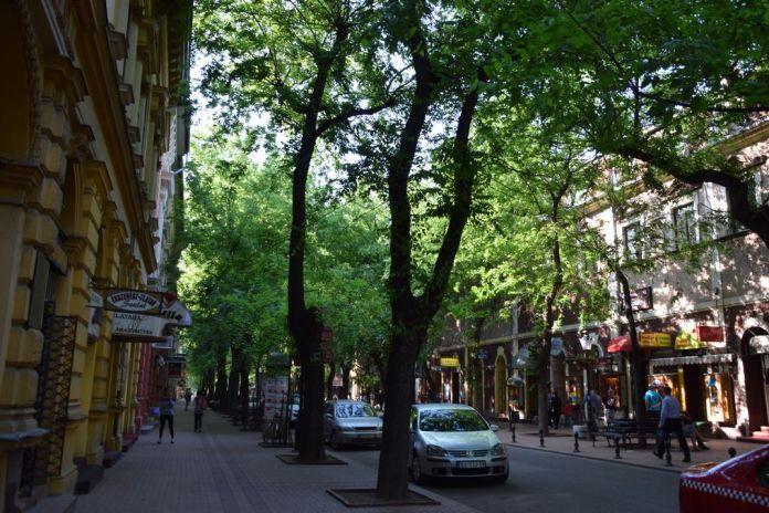 rue ombragée Subotica Serbie