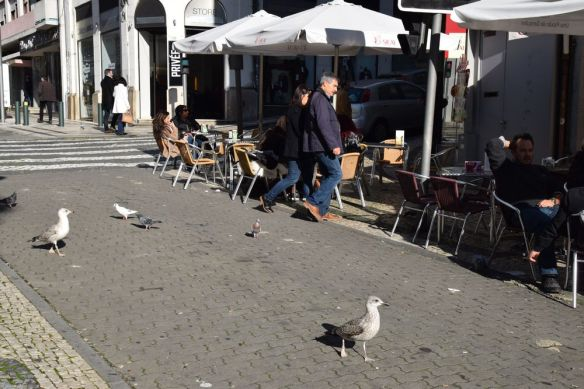 mouettes pigeons rue santa catarina porto portugal
