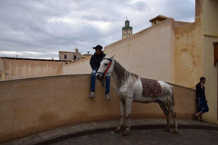 cheval au repos Médina de Fès
