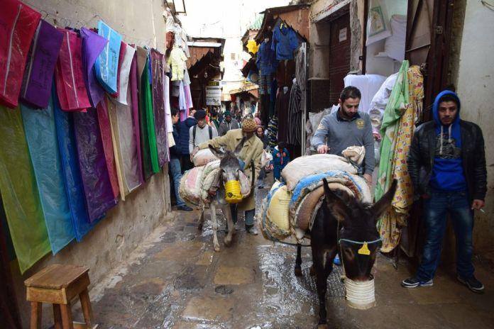 les ânes tracent leur chemin dans la Médina de Fès