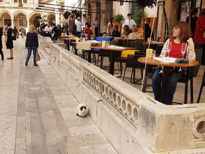 café de la ville et chat dubrovnik