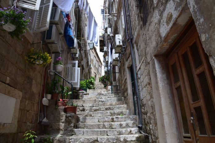 plantes et fleurs à Dubrovnik