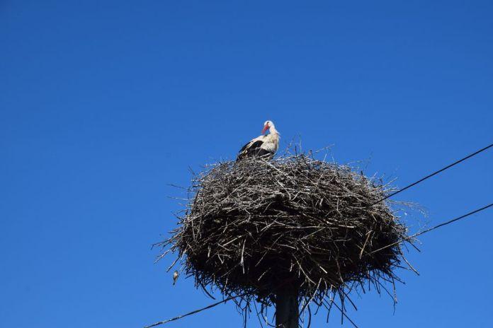 nid de cigogne bucovine