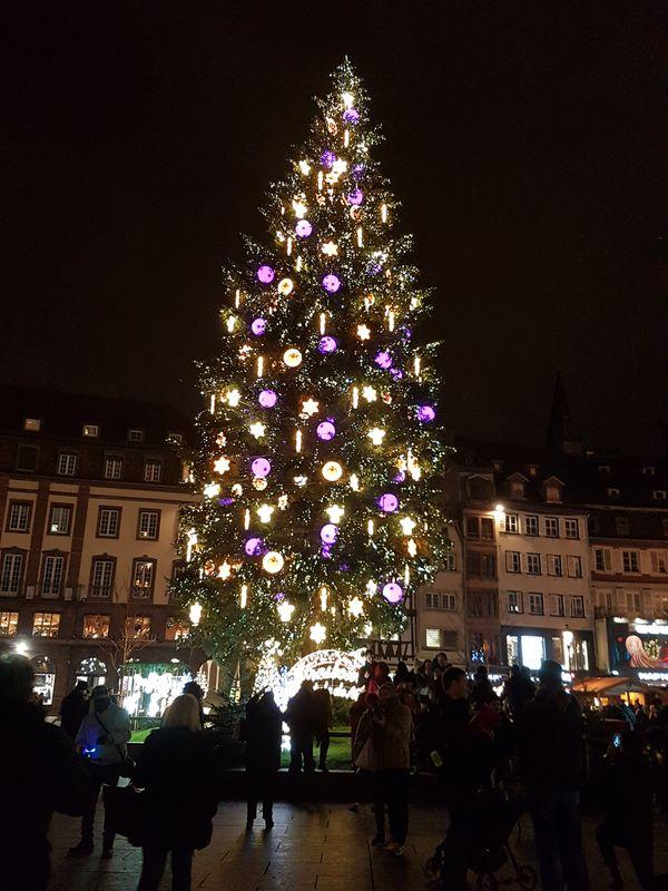 grand arbre de Noël place Kléber strasbourg