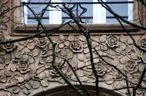 rosiers en relief sous les fenêtres du 56 allée de la Robertsau strasbourg